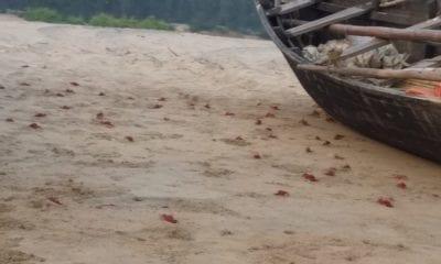 Dagara: Rendezvous with Red Crabs